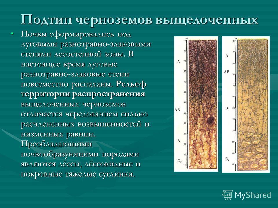 Подтип черноземов выщелоченных Почвы сформировались под луговыми разнотравно-злаковыми степями лесостепной зоны. В настоящее время луговые разнотравно-злаковые степи повсеместно распаханы. Рельеф территории распространения выщелоченных черноземов отл
