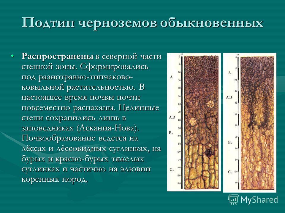 Подтип черноземов обыкновенных Распространены в северной части степной зоны. Сформировались под разнотравно-типчаково- ковыльной растительностью. В настоящее время почвы почти повсеместно распаханы. Целинные степи сохранились лишь в заповедниках (Аск