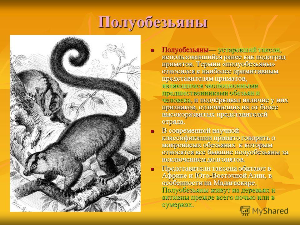Полуобезьяны Полуобезьяны устаревший таксон, использовавшийся ранее как подотряд приматов. Термин «полуобезьяны» относился к наиболее примитивным представителям приматов, являющимся эволюционными предшественниками обезьян и человека, и подчёркивал на