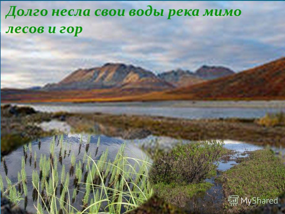 Долго несла свои воды река мимо лесов и гор