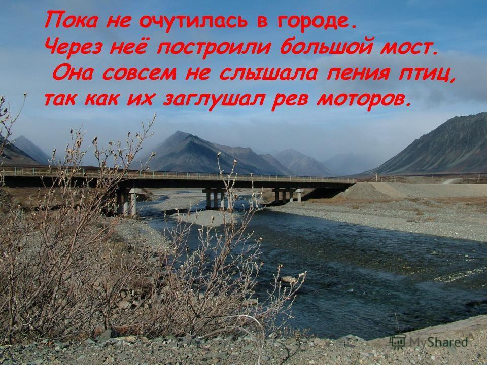 Пока не очутилась в городе. Через неё построили большой мост. Она совсем не слышала пения птиц, так как их заглушал рев моторов.