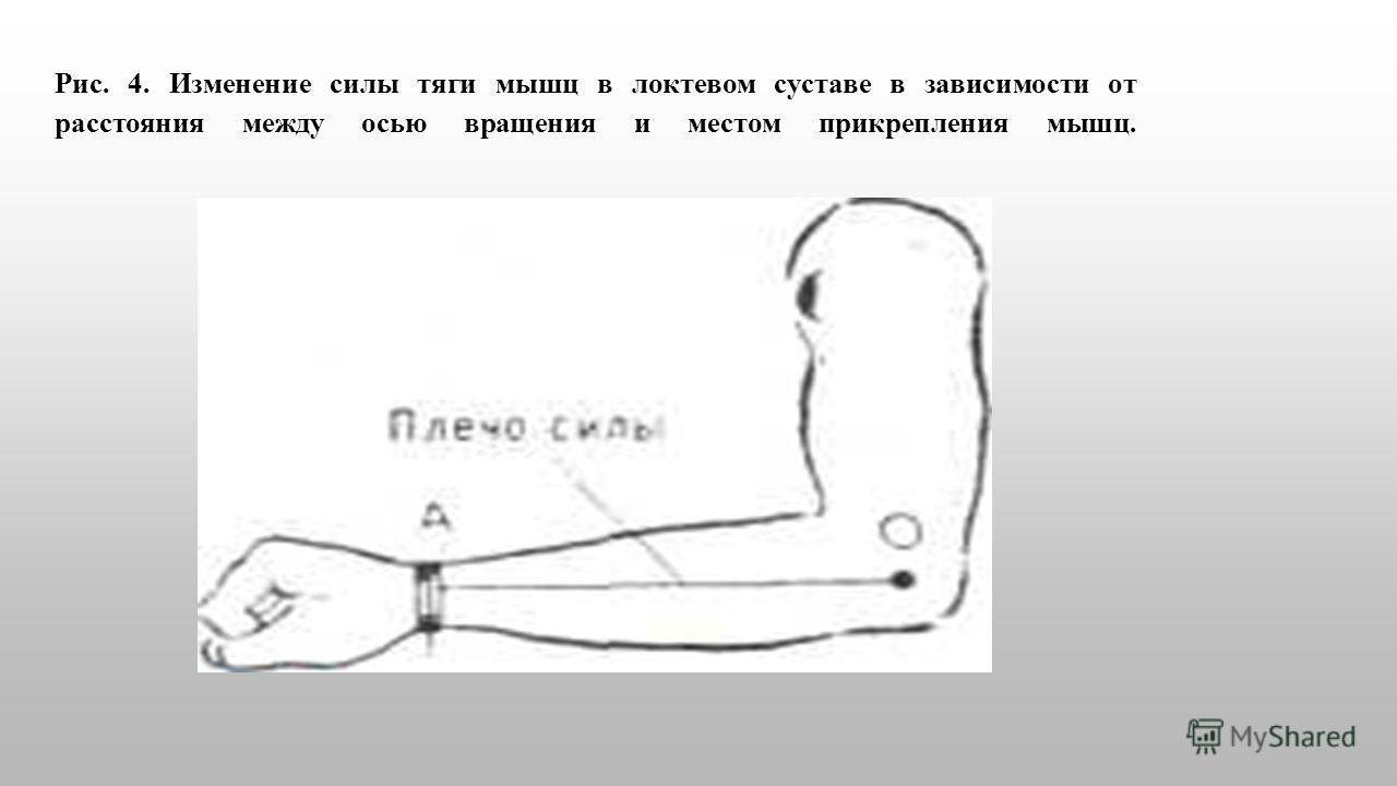 Рис. 4. Изменение силы тяги мышц в локтевом суставе в зависимости от расстояния между осью вращения и местом прикрепления мышц.