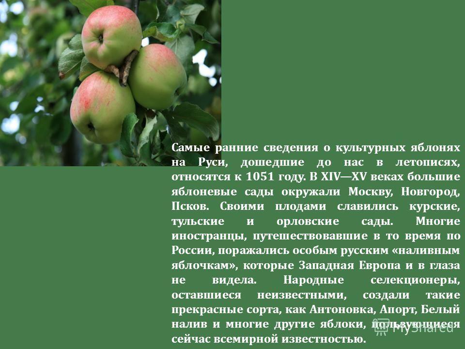 Самые ранние сведения о культурных яблонях на Руси, дошедшие до нас в летописях, относятся к 1051 году. В XIVXV веках большие яблоневые сады окружали Москву, Новгород, Псков. Своими плодами славились курские, тульские и орловские сады. Многие иностра