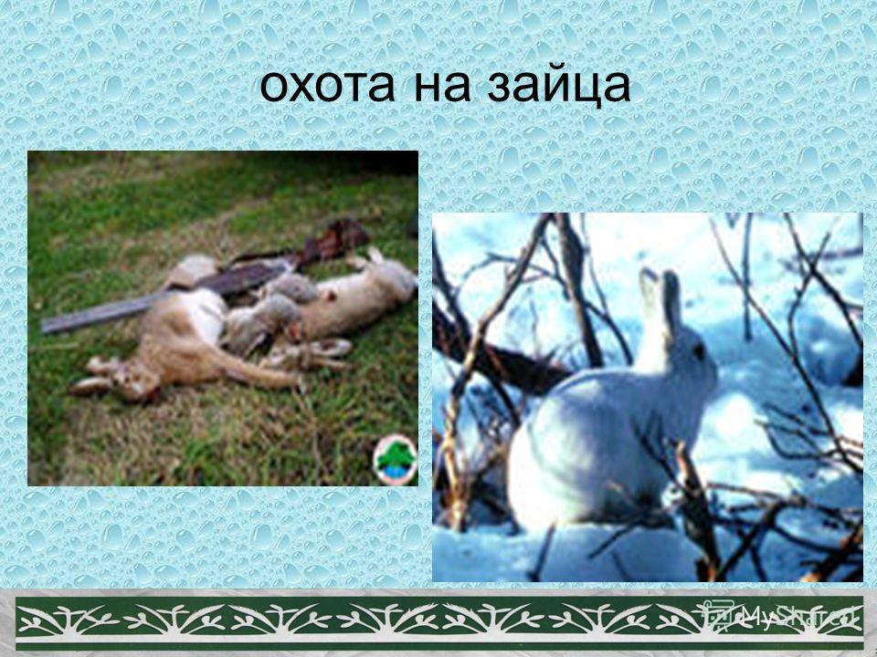 Книга охота на зайца скачать бесплатно