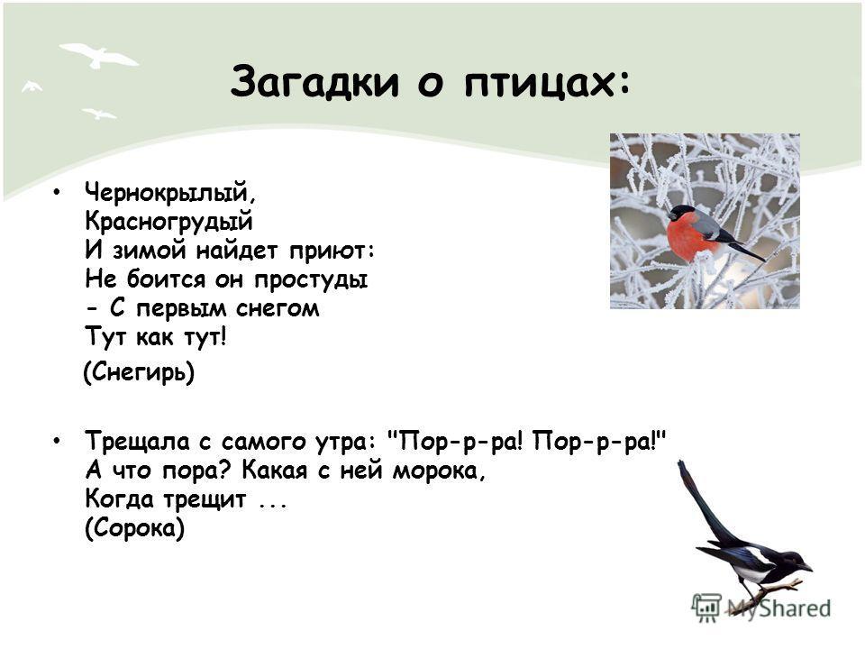 Загадки о птицах: Чернокрылый, Красногрудый И зимой найдет приют: Не боится он простуды - С первым снегом Тут как тут! (Снегирь) Трещала с самого утра: Пор-р-ра! Пор-р-ра! А что пора? Какая с ней морока, Когда трещит... (Сорока)
