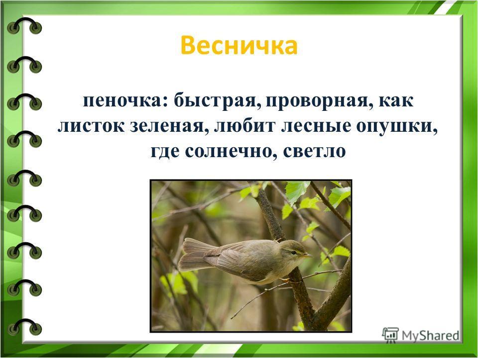 Весничка пеночка: быстрая, проворная, как листок зеленая, любит лесные опушки, где солнечно, светло