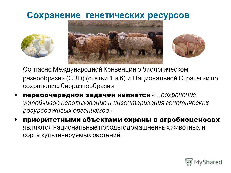 Сохранение генетических ресурсов Согласно Международной Конвенции о биологическом разнообразии (CBD) (статьи 1 и 6) и Национальной Стратегии по сохранению биоразнообразия: первоочередной задачей является «...сохранение, устойчивое использование и инв