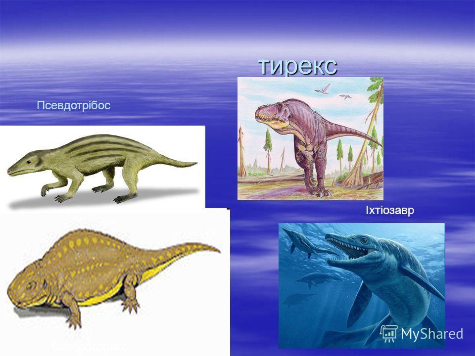Зауролофы Зауролофы Зауролофы Зауролофы род птицетазовых утконосых динозавров, живших в позднем меловом периоде. Зауролофы род птицетазовых утконосых динозавров, живших в позднем меловом периоде.