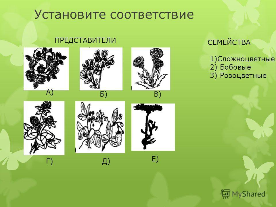 Установите соответствие ПРЕДСТАВИТЕЛИ СЕМЕЙСТВА 1)Сложноцветные 2) Бобовые 3) Розоцветные А) Б)В) Г)Д) Е)