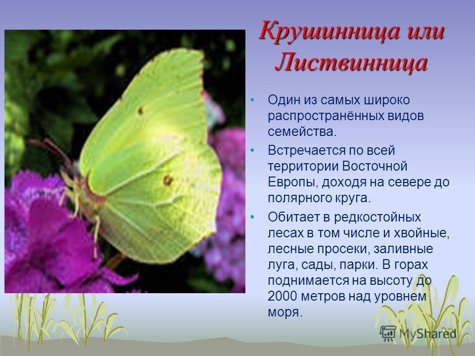 Крушинница или Листвинница Один из самых широко распространённых видов семейства. Встречается по всей территории Восточной Европы, доходя на севере до полярного круга. Обитает в редкостойных лесах в том числе и хвойные, лесные просеки, заливные луга,