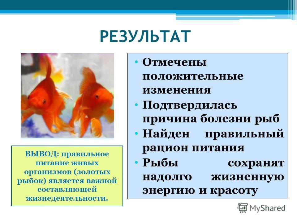 РЕЗУЛЬТАТ Отмечены положительные изменения Подтвердилась причина болезни рыб Найден правильный рацион питания Рыбы сохранят надолго жизненную энергию и красоту ВЫВОД: правильное питание живых организмов (золотых рыбок) является важной составляющей жи