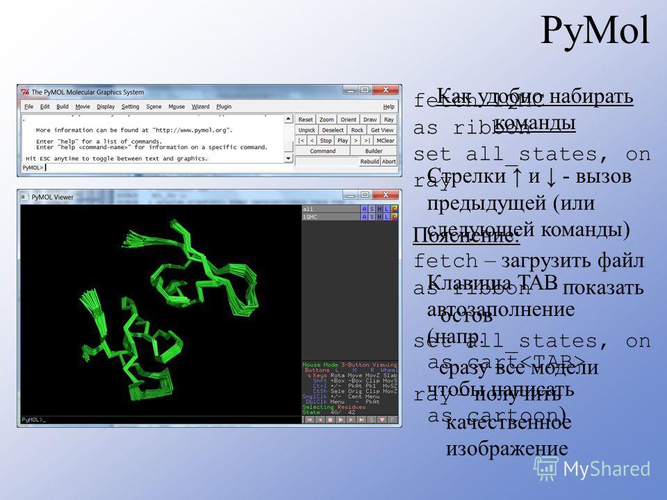 PyMol fetch 1QMC as ribbon set all_states, on ray Пояснение: fetch – загрузить файл as ribbon – показать остов set all_states, on сразу все модели ray – получить качественное изображение Как удобно набирать команды Стрелки и - вызов предыдущей (или с