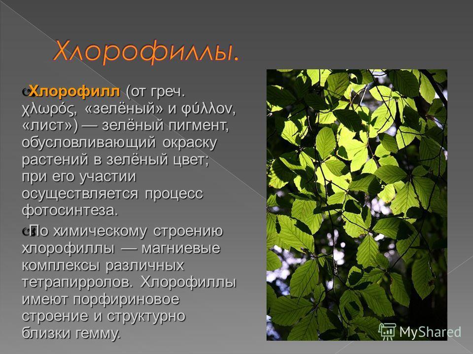 Хлорофилл (от греч. χλωρός, «зелёный» и φύλλον, «лист») зелёный пигмент, обусловливающий окраску растений в зелёный цвет; при его участии осуществляется процесс фотосинтеза. Хлорофилл (от греч. χλωρός, «зелёный» и φύλλον, «лист») зелёный пигмент, обу