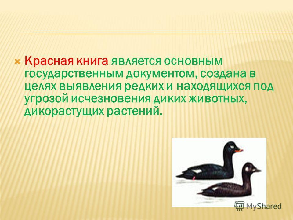 Красная книга является основным государственным документом, создана в целях выявления редких и находящихся под угрозой исчезновения диких животных, дикорастущих растений.