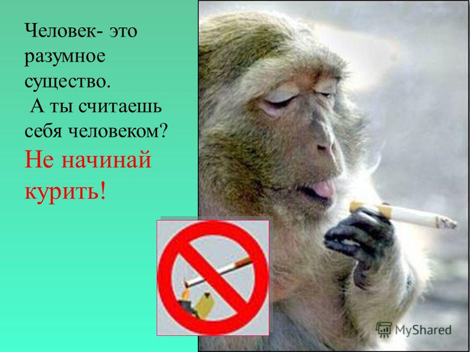 Знаете ли вы? Знак «курить запрещено» становится в России всё более популярным. Теперь в Совете Федерации запрещено курить везде, кроме специально отведённых мест. До сенаторов с подобным запретом столкнулись студенты, депутаты Государственной Думы,