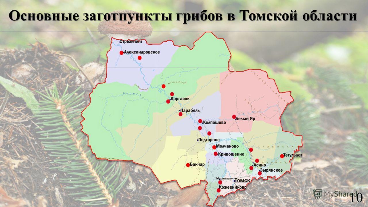 Основные заготпункты грибов в Томской области 10