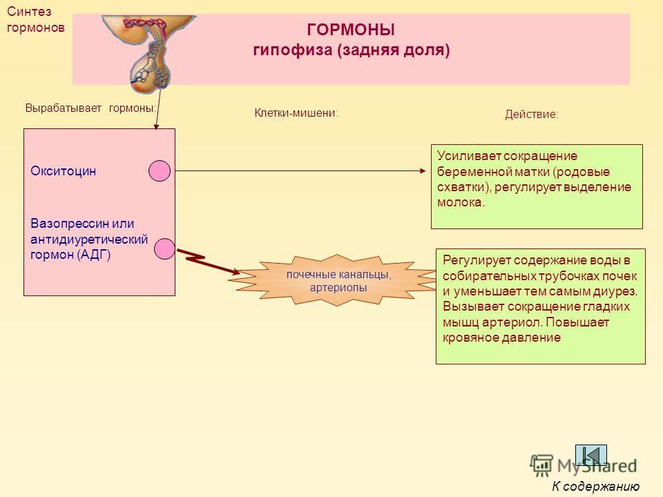 ГОРМОНЫ гипофиза (задняя доля) Окситоцин Вазопрессин или антидиуретический гормон (АДГ) Вырабатывает гормоны: Клетки-мишени: Усиливает сокращение беременной матки (родовые схватки), регулирует выделение молока. Регулирует содержание воды в собиратель