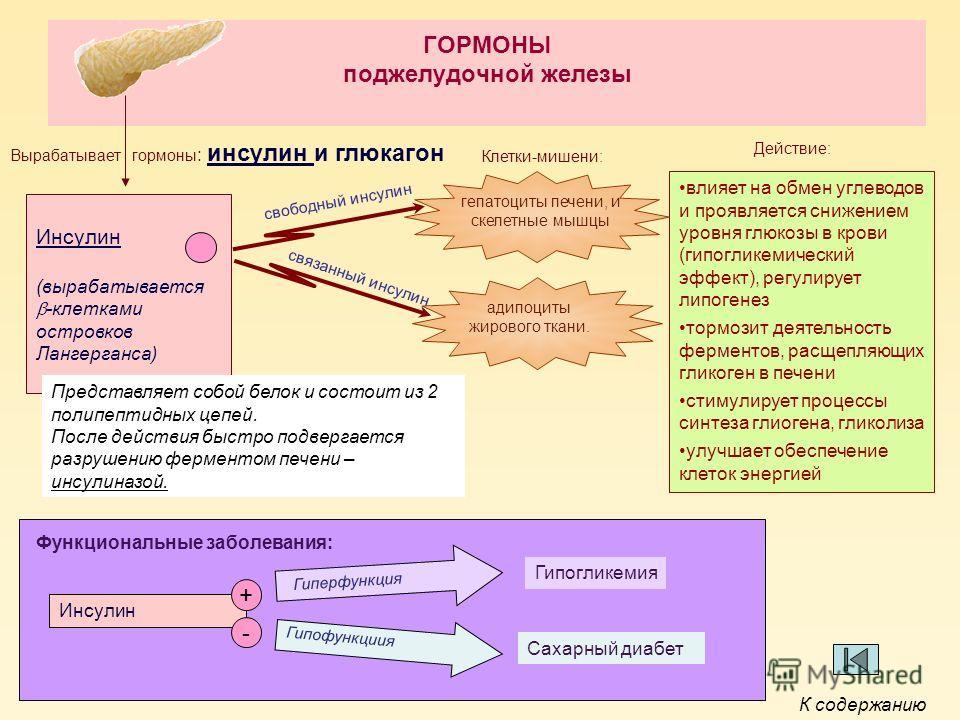 ГОРМОНЫ поджелудочной железы Инсулин (вырабатывается -клетками островков Лангерганса) Вырабатывает гормоны : инсулин и глюкагон Клетки-мишени: адипоциты жирового ткани. гепатоциты печени, и скелетные мышцы влияет на обмен углеводов и проявляется сниж