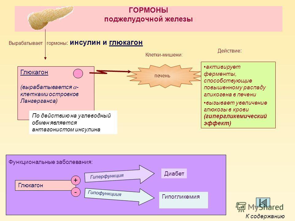 ГОРМОНЫ поджелудочной железы Глюкагон (вырабатывается - клетками островков Лангерганса) Клетки-мишени: печень активирует ферменты, способствующие повышенному распаду гликогена в печени вызывает увеличение глюкозы в крови (гипергликемический эффект) П