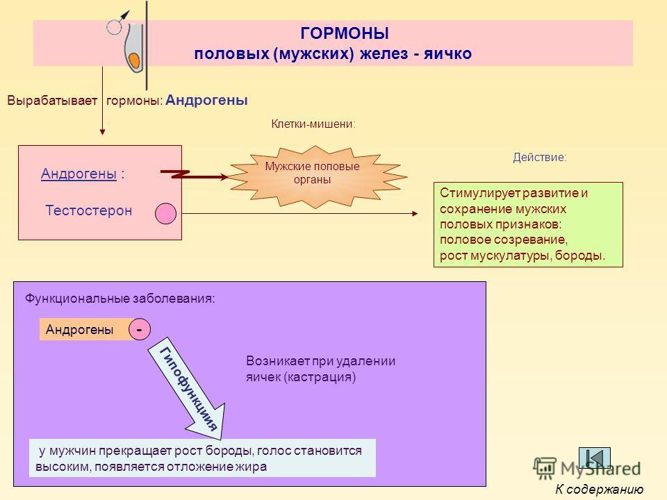 ГОРМОНЫ половых (мужских) желез - яичко Андрогены : Вырабатывает гормоны: Андрогены Клетки-мишени: Мужские половые органы Стимулирует развитие и сохранение мужских половых признаков: половое созревание, рост мускулатуры, бороды. Действие: Тестостерон
