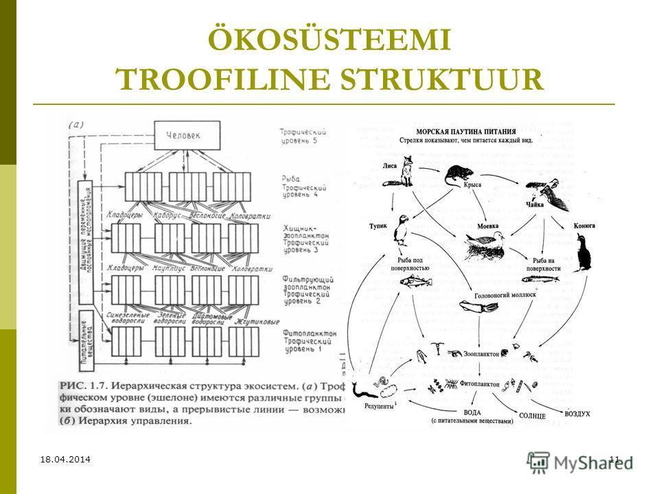 ÖKOSÜSTEEMI TROOFILINE STRUKTUUR 18.04.201411