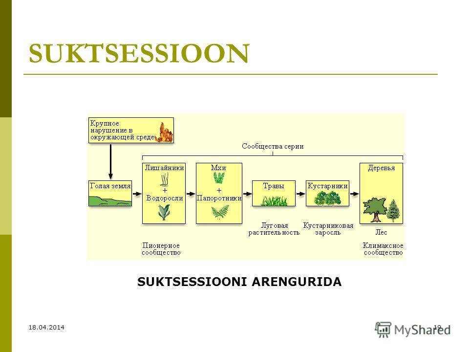 SUKTSESSIOON SUKTSESSIOONI ARENGURIDA 18.04.201419