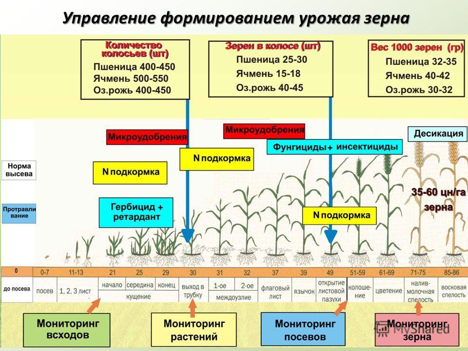 Управление формированием урожая зерна