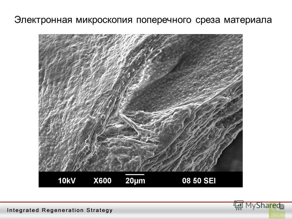 Электронная микроскопия поперечного среза материала