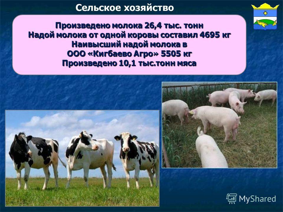 Сельское хозяйство Произведено молока 26,4 тыс. тонн Надой молока от одной коровы составил 4695 кг Наивысший надой молока в ООО «Кигбаево Агро» 5505 кг Произведено 10,1 тыс.тонн мяса