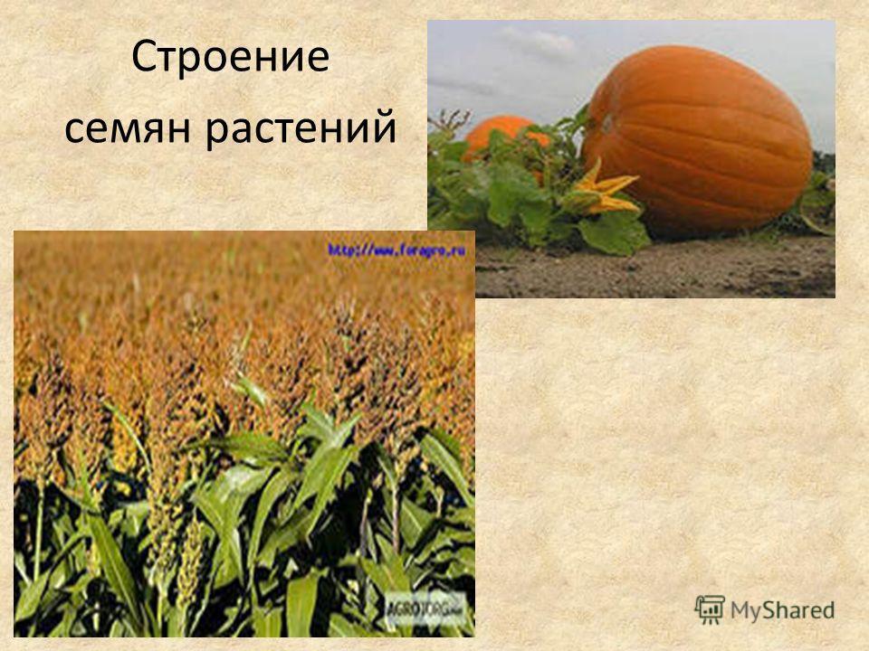 Строение семян растений