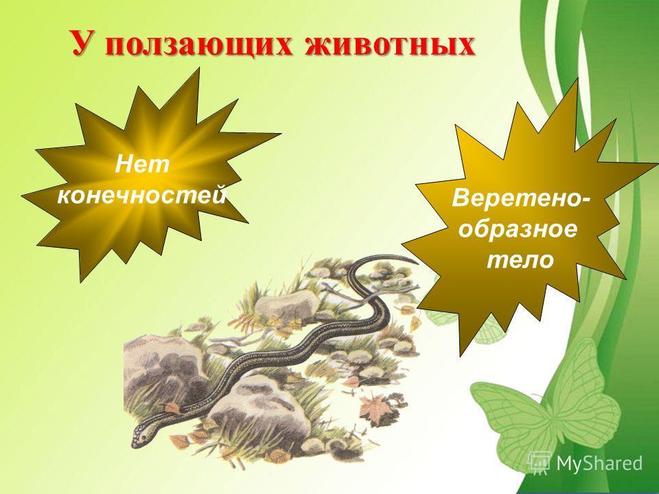 У ползающих животных Нет конечностей Веретено- образное тело