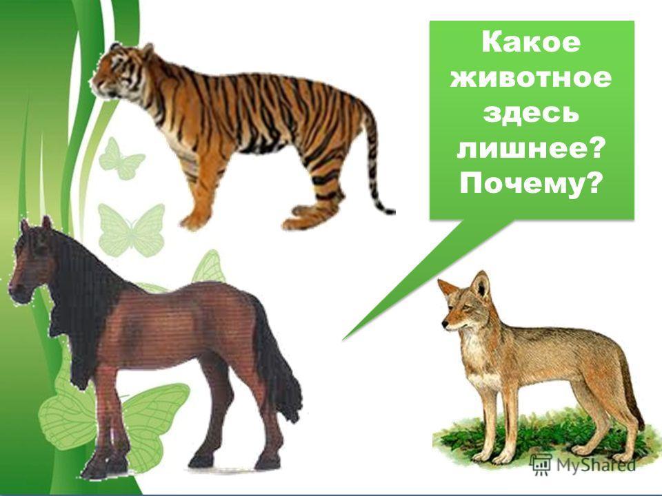 Какое животное здесь лишнее? Почему? Какое животное здесь лишнее? Почему?