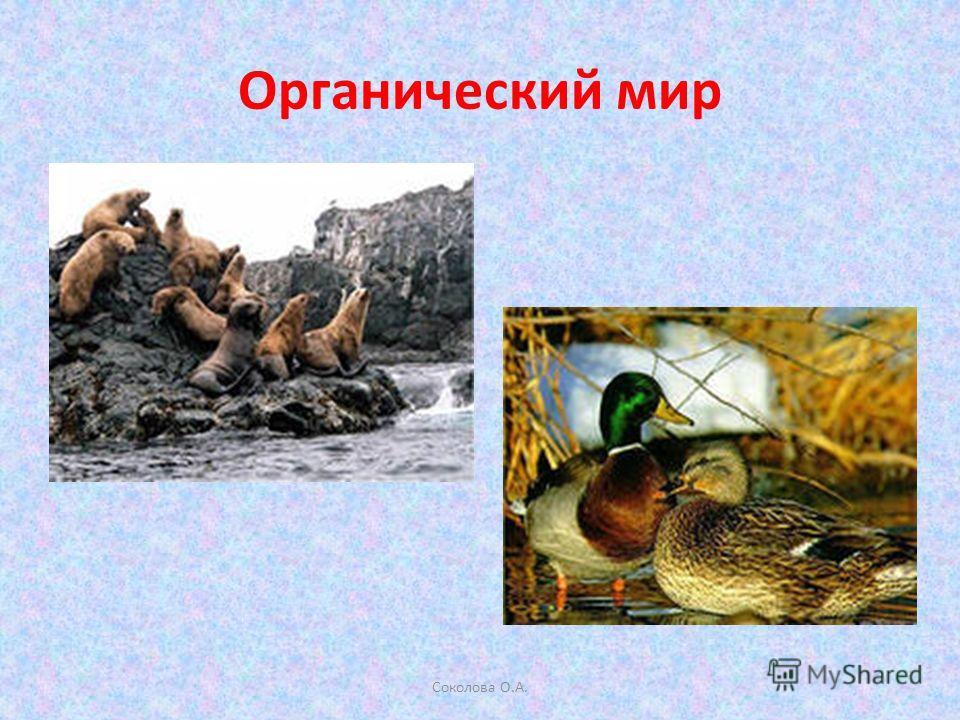 Органический мир Соколова О.А.