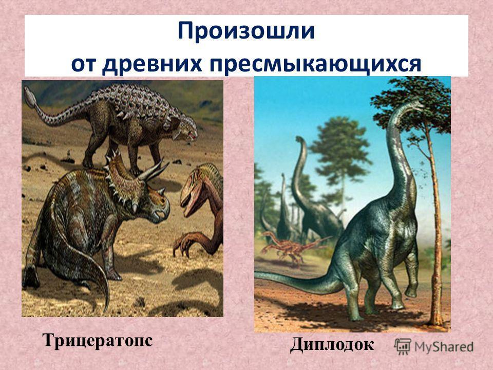 Произошли от древних пресмыкающихся Трицератопс Диплодок