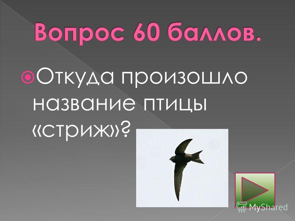 Откуда произошло название птицы «стриж»?