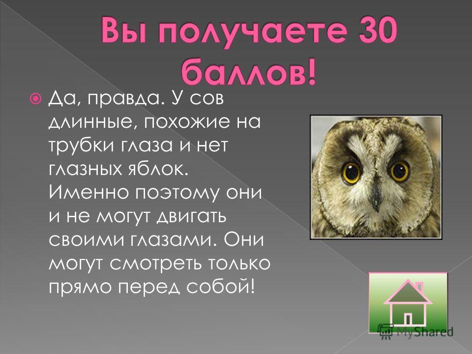 Да, правда. У сов длинные, похожие на трубки глаза и нет глазных яблок. Именно поэтому они и не могут двигать своими глазами. Они могут смотреть только прямо перед собой!