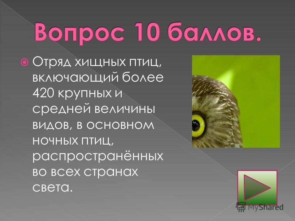 Отряд хищных птиц, включающий более 420 крупных и средней величины видов, в основном ночных птиц, распространённых во всех странах света.