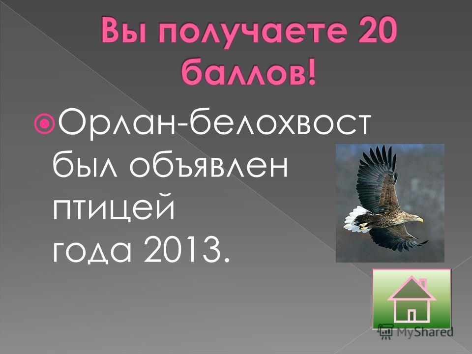 Орлан-белохвост был объявлен птицей года 2013.