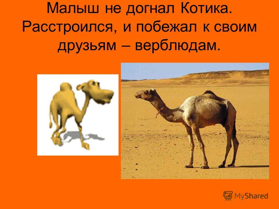 Малыш не догнал Котика. Расстроился, и побежал к своим друзьям – верблюдам.