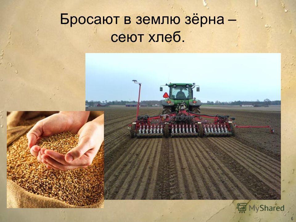 Бросают в землю зёрна – сеют хлеб. 6