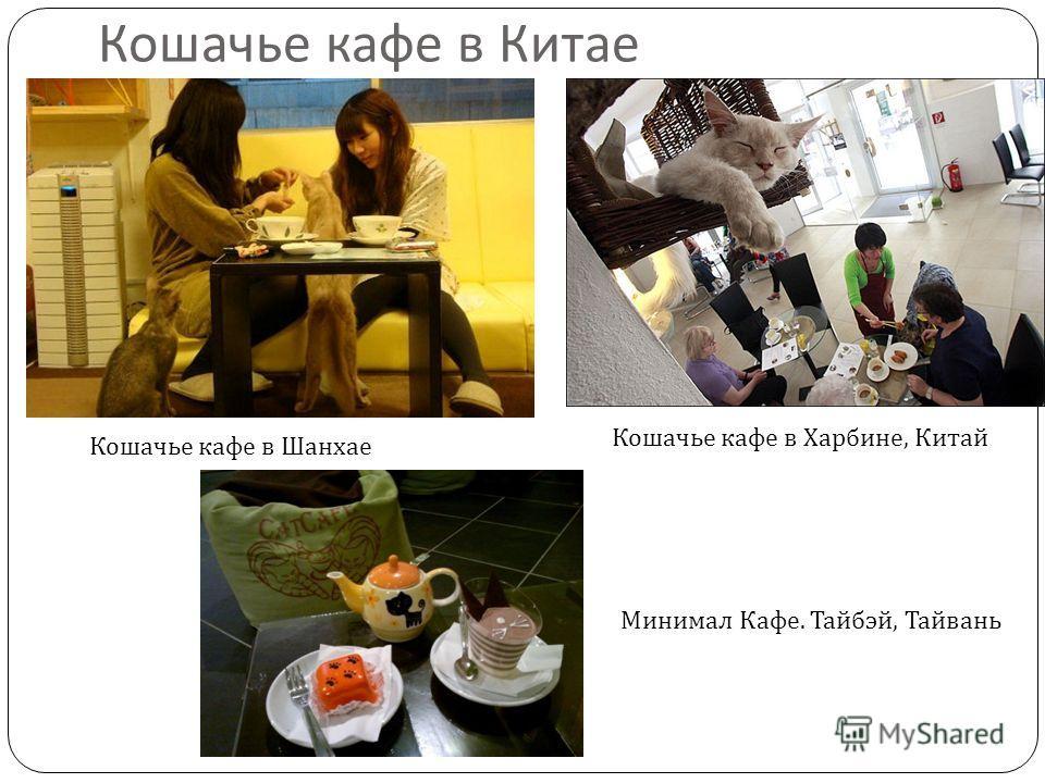 Кошачье кафе в Китае Кошачье кафе в Харбине, Китай Кошачье кафе в Шанхае Минимал Кафе. Тайбэй, Тайвань
