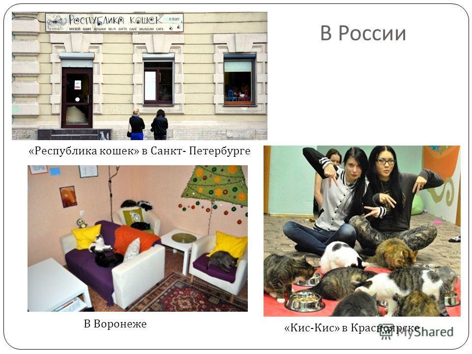 В России « Республика кошек » в Санкт - Петербурге « Кис - Кис » в Красноярске В Воронеже