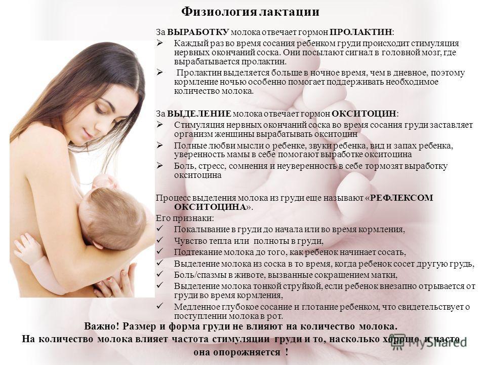 За ВЫРАБОТКУ молока отвечает гормон ПРОЛАКТИН: Каждый раз во время сосания ребенком груди происходит стимуляция нервных окончаний соска. Они посылают сигнал в головной мозг, где вырабатывается пролактин. Пролактин выделяется больше в ночное время, че