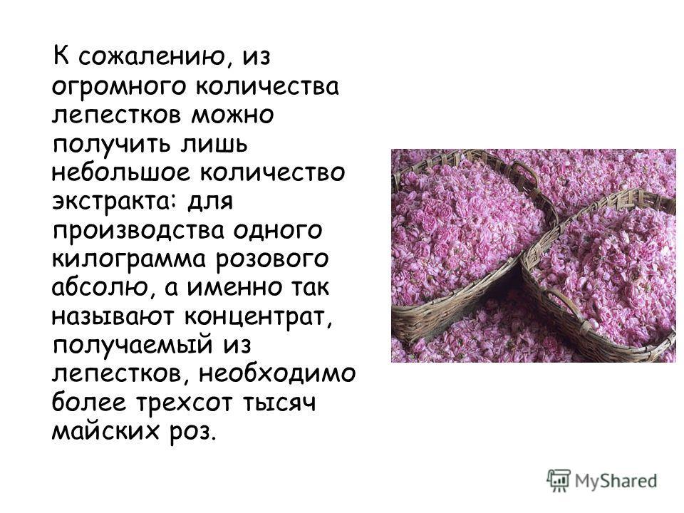 К сожалению, из огромного количества лепестков можно получить лишь небольшое количество экстракта: для производства одного килограмма розового абсолю, а именно так называют концентрат, получаемый из лепестков, необходимо более трехсот тысяч майских р