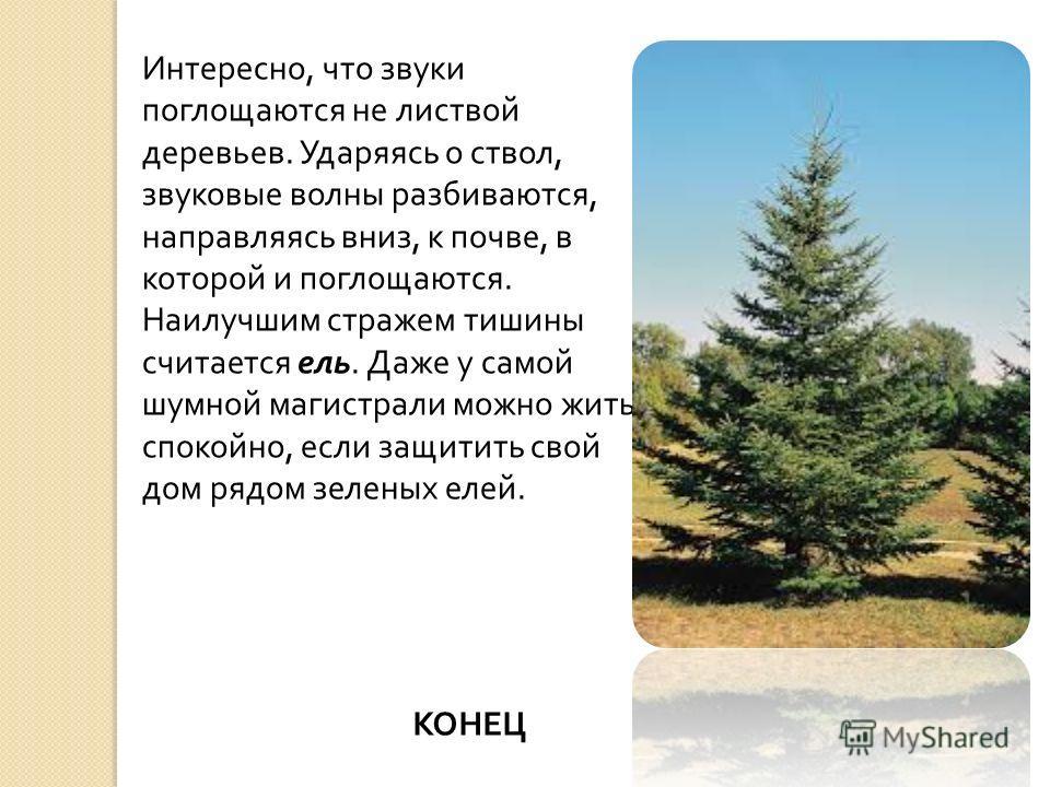 Интересно, что звуки поглощаются не листвой деревьев. Ударяясь о ствол, звуковые волны разбиваются, направляясь вниз, к почве, в которой и поглощаются. Наилучшим стражем тишины считается ель. Даже у самой шумной магистрали можно жить спокойно, если з