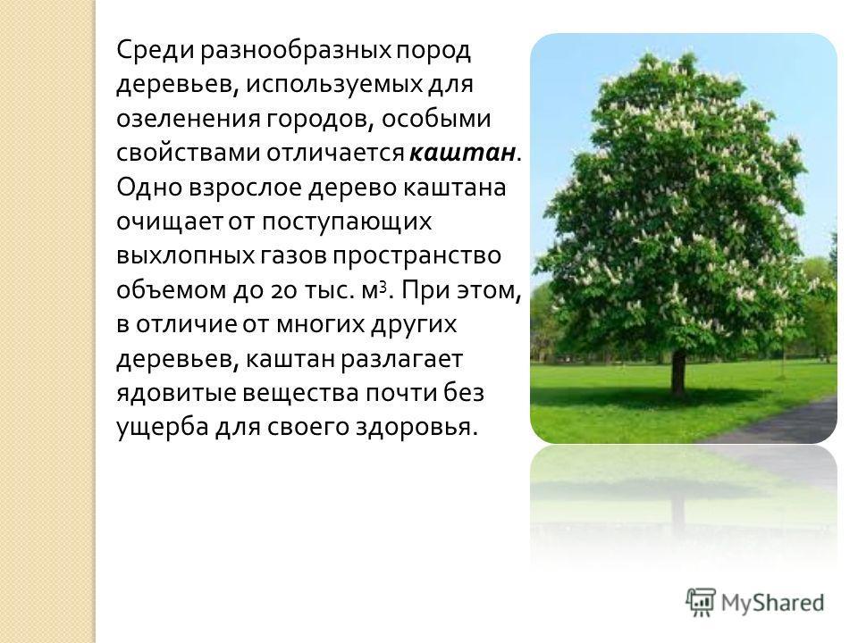 Среди разнообразных пород деревьев, используемых для озеленения городов, особыми свойствами отличается каштан. Одно взрослое дерево каштана очищает от поступающих выхлопных газов пространство объемом до 20 тыс. м 3. При этом, в отличие от многих друг