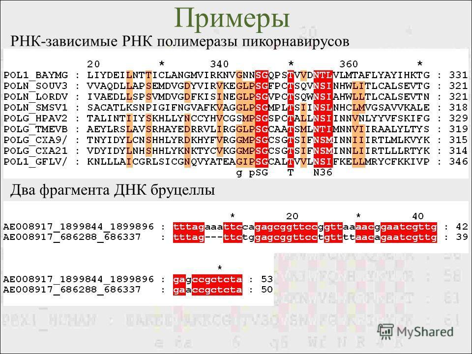 Примеры РНК-зависимые РНК полимеразы пикорнавирусов Два фрагмента ДНК бруцеллы