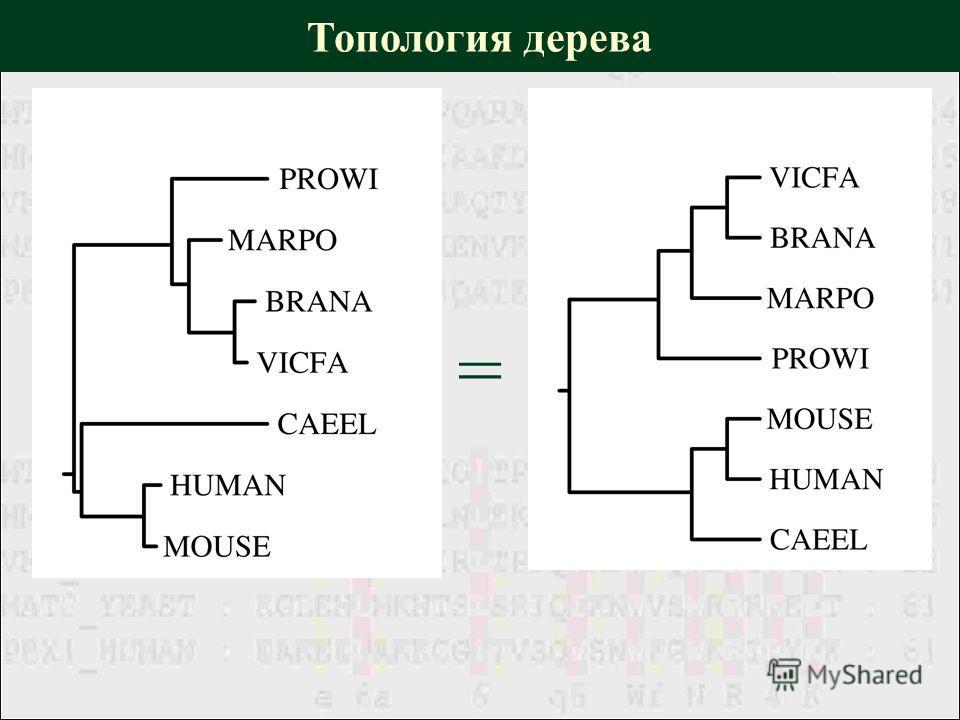 Топология дерева =