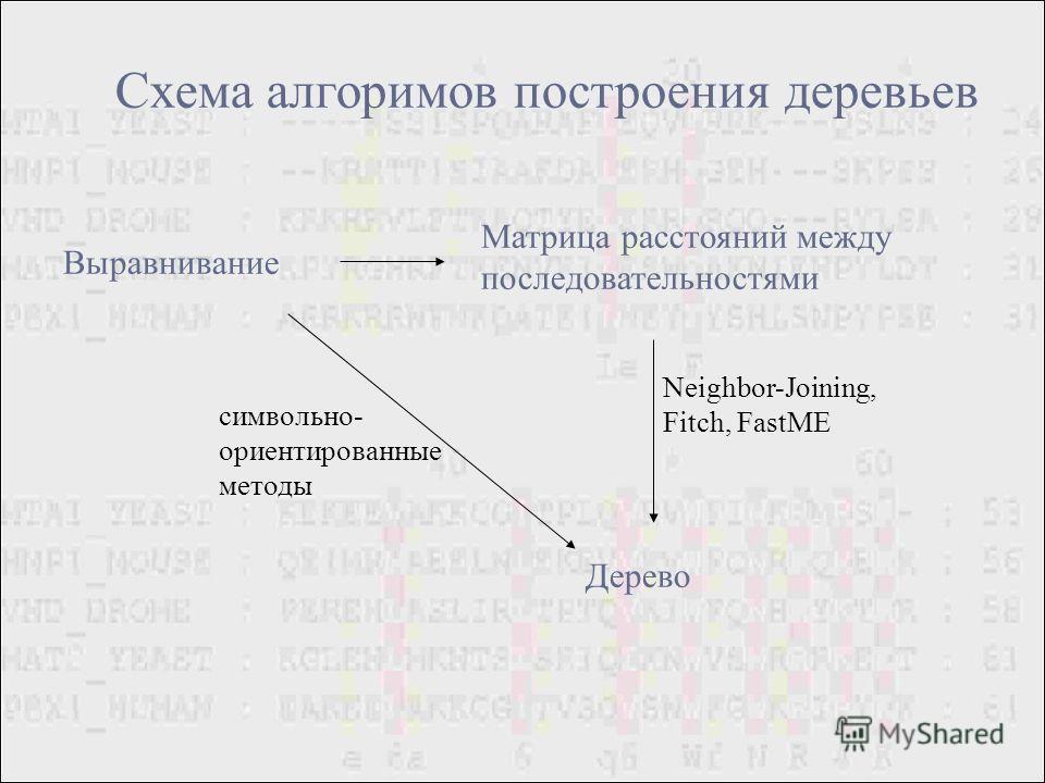 Схема алгоримов построения деревьев Выравнивание Матрица расстояний между последовательностями Дерево символьно- ориентированные методы Neighbor-Joining, Fitch, FastME