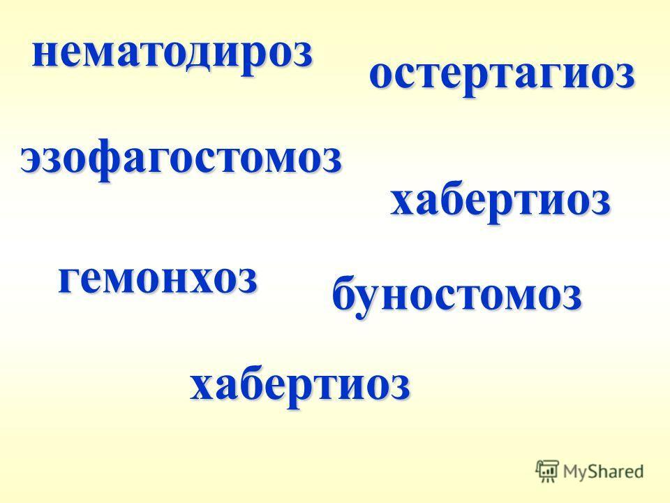 эзофагостомоз хабертиоз хабертиоз буностомоз нематодироз остертагиоз гемонхоз